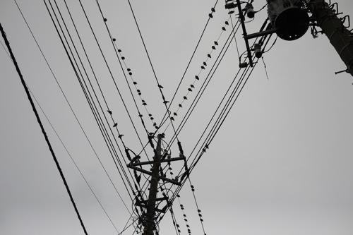 P1400396.jpg