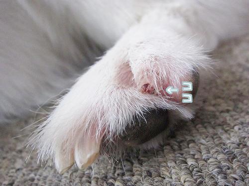 ろんたんの爪