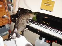 ピアノ大好き苺!