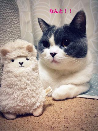 アルパカって羊なの?