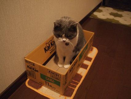 この箱いい感じなの