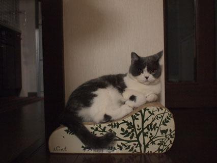 王子様のソファなのです