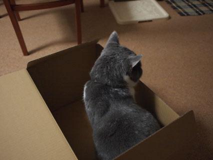 箱入り息子ですから