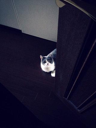 また入るの?