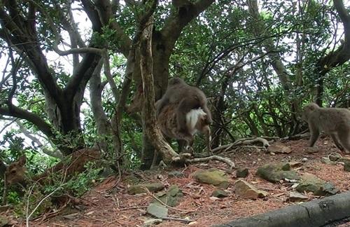 逃げる鹿と猿-crop