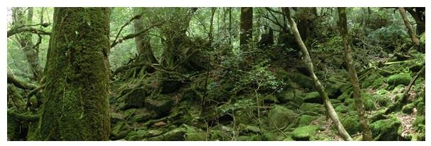 白谷雲水峡の苔むす森