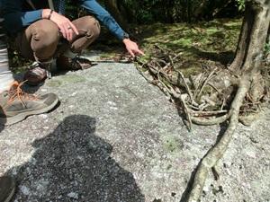 岩盤の上に森ができている