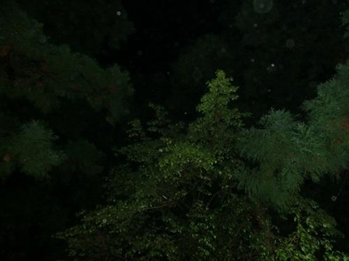 3日目夜ロッジ前の木を見上げて