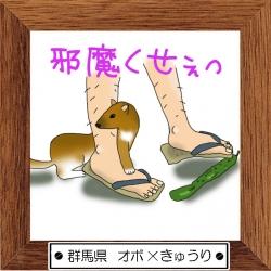 10群馬県 オボ×きゅうり