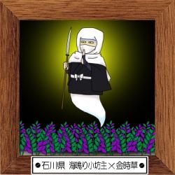 16石川県 海鳴り小坊主×金時草