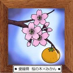 38愛媛県 桜の木×みかん