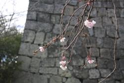 15丸亀城8