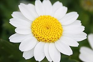いろんなところで見る白い花3