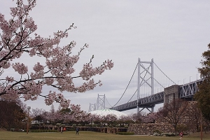 瀬戸大橋と桜1