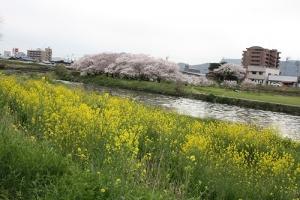 通りすがりの香東川1