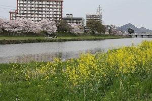 通りすがりの香東川2