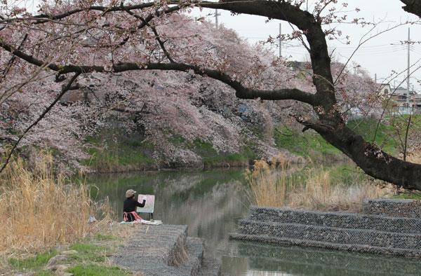 kamo-sakura-7.jpg