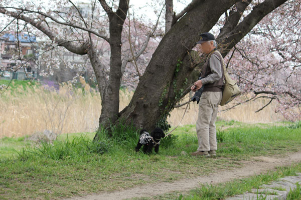 kamo-sakura-9a.jpg
