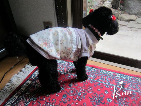 new dress-2