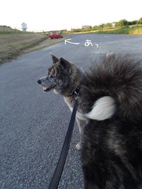 散歩の途中4