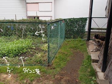 わんこ庭2