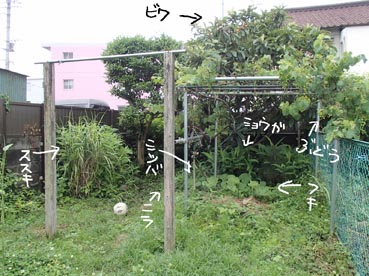 わんこ庭3