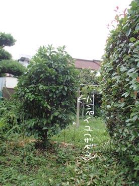 わんこ庭4