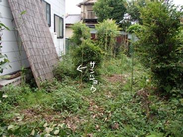 わんこ庭6
