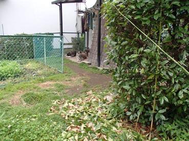 わんこ庭7