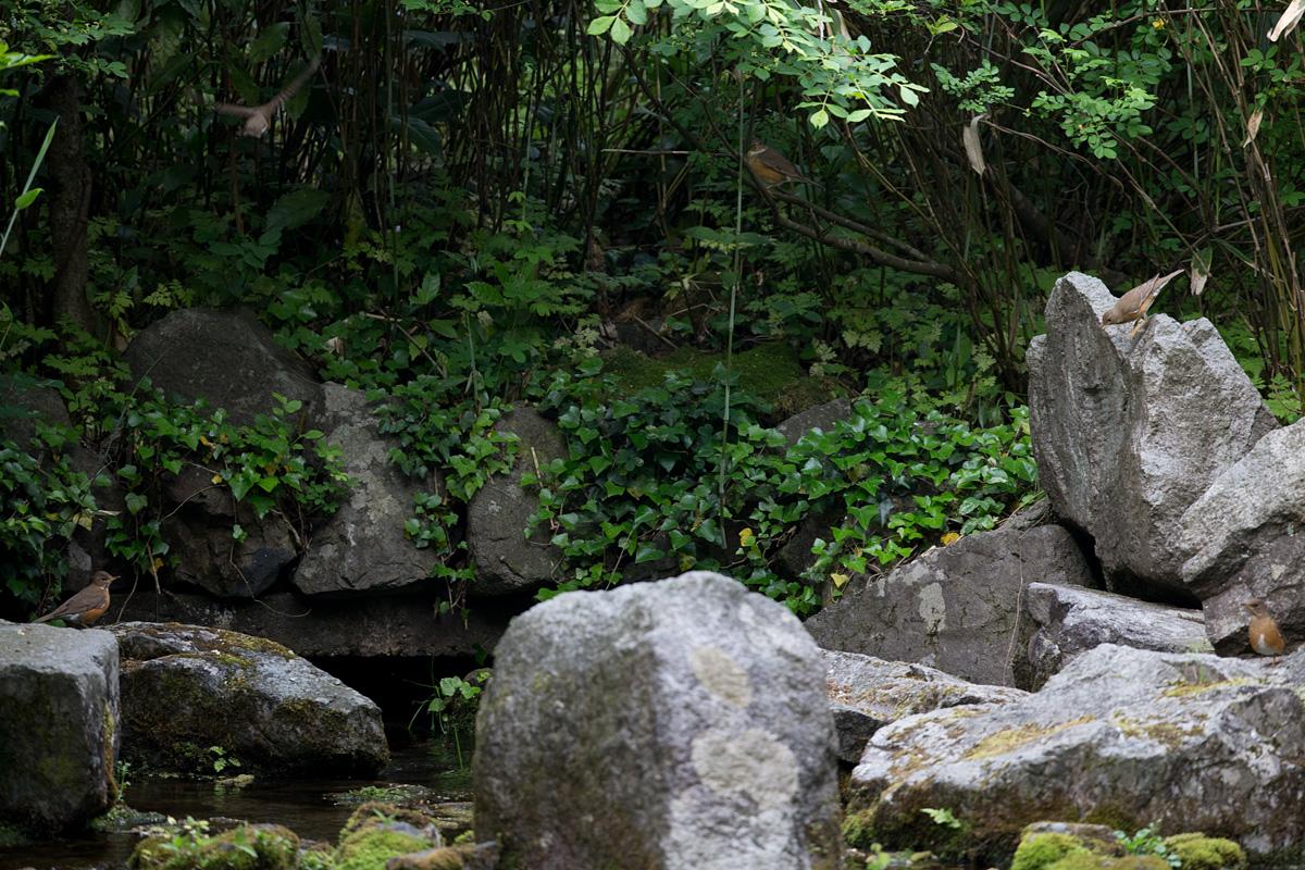 1DX_7668-akahara-5.jpg