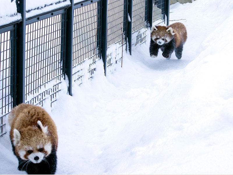 円山動物園(ココとホクト)