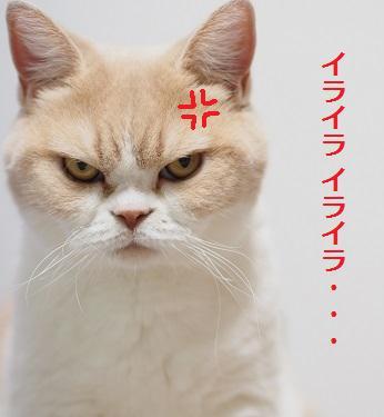 koyuki_pr_51.jpg