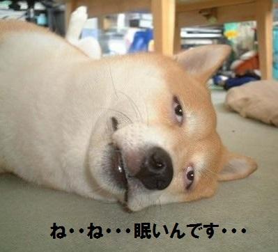 nemui_inu.jpg