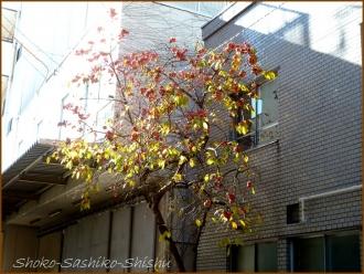 20131217 1本の柿の木 1 冬のいろどり