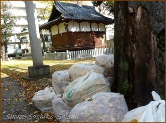 20131217 ゴミ袋 冬のいろどり