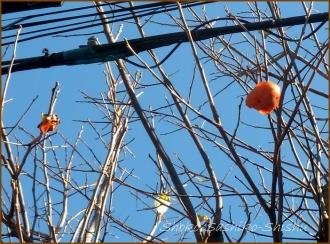 20131217 柿 2 冬のいろどり