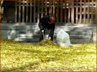 20131217 銀杏掃除 1 冬のいろどり