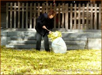 20131217 銀杏掃除 2 冬のいろどり
