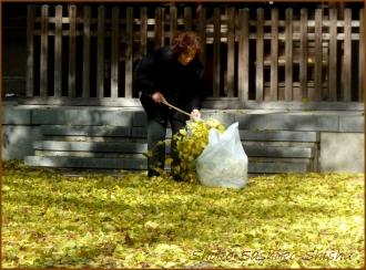 20131217 銀杏掃除 3 冬のいろどり