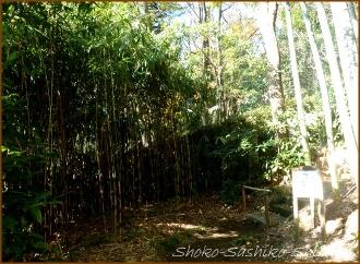 20141222 竹林 1  芭蕉庵