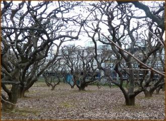 20150122 柿の木 2 小田急に乗って