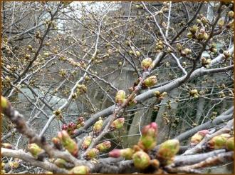 20150322  桜 2  春を見つけ