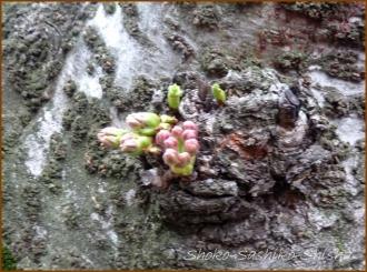 20150322  桜 4  春を見つけ