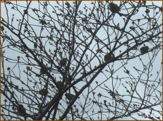 20150322  雀 2  春を見つけ