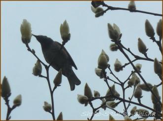 20150322 鳥  春を見つけ