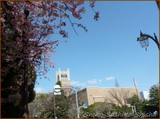 20150326 桜 1  卒業式