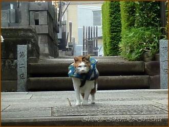 20150426 24 カメラ 2 東長谷寺