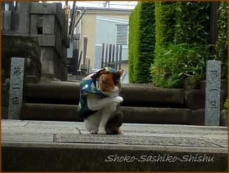 20150426 24 カメラ 3 東長谷寺