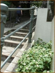 20150525 階段 3  階段と紫陽花