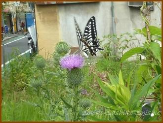20150615 虫 4  紫陽花